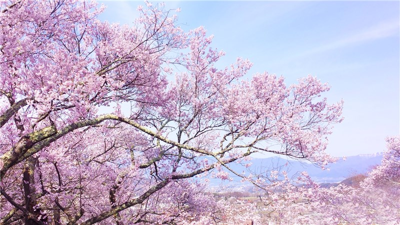 お花見観光で有名な場所