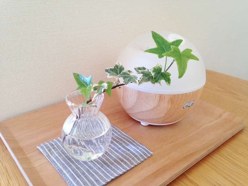 加湿器を使わず手軽にできる乾燥対策
